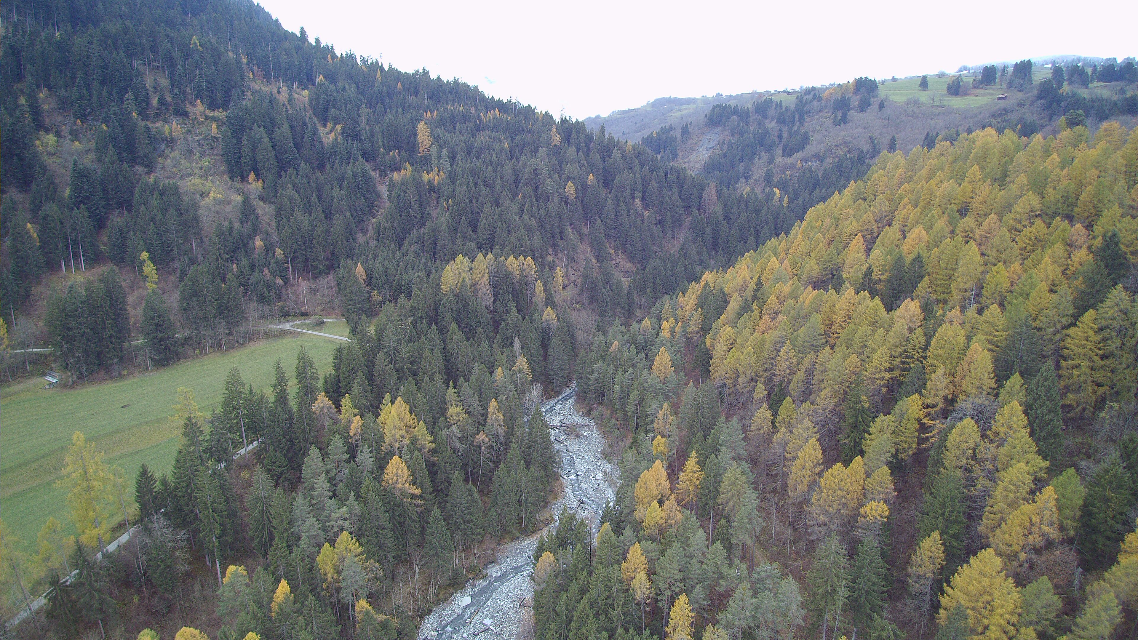 The forests of the Albula Valley