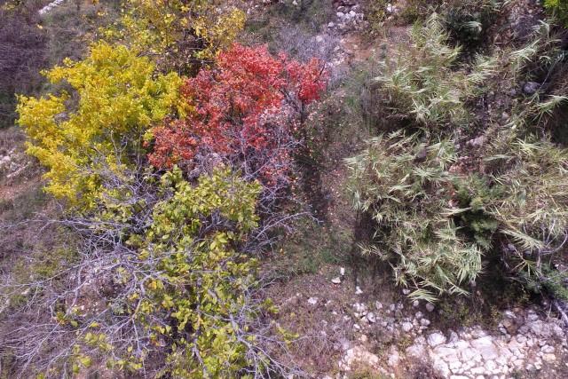Autumn patches