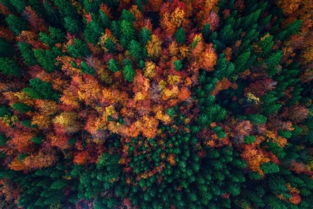 Aerial view over autumn forest