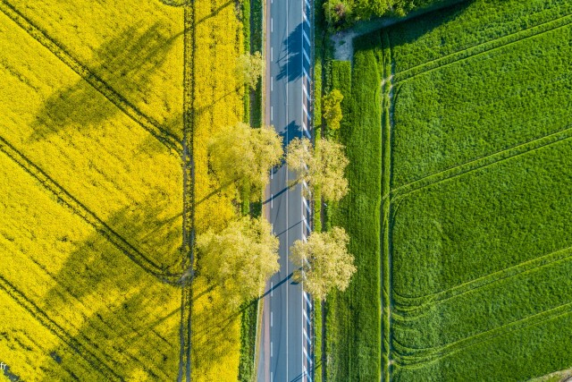Road surrounded by fields