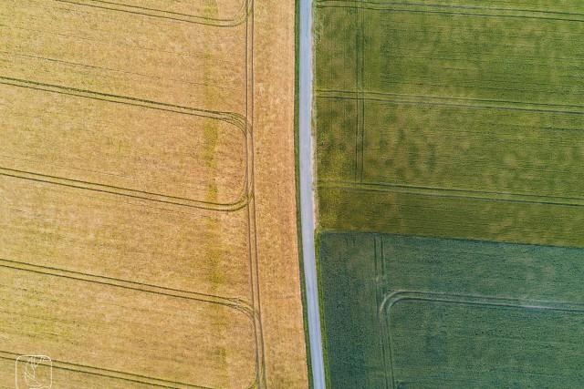 Trio of wheat fields