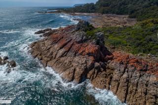 Lichen of the north west