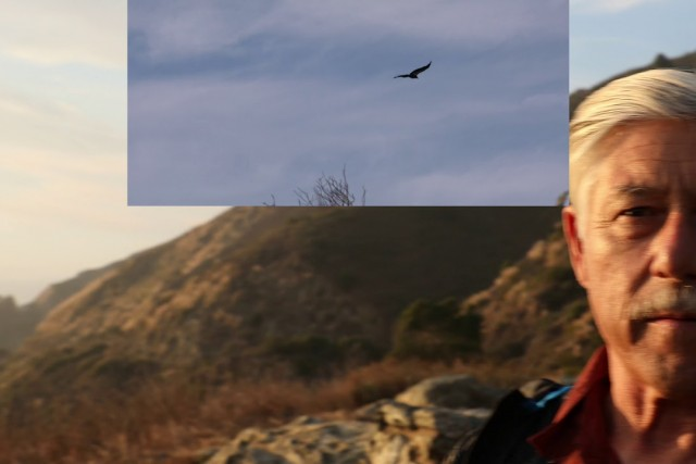 Big Sur Condors!