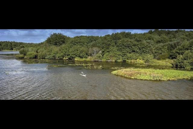 Birds of the Leon Lake, Landes FRANCE