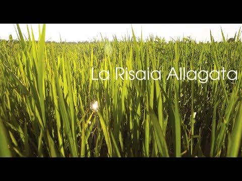Milano Paddy Field