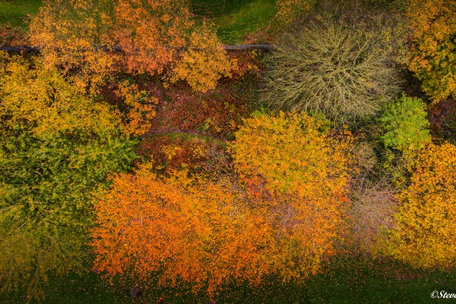 Above the canopy – Autumn Colours