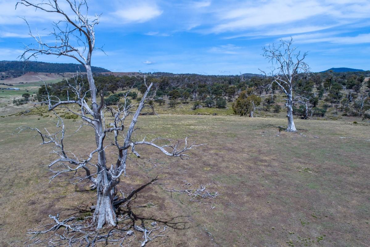 Two Trees – Outback Tasmania