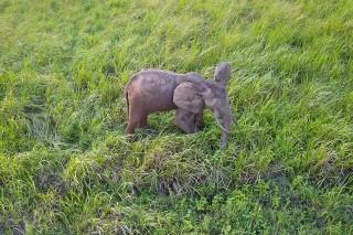 The Elephant OTTO