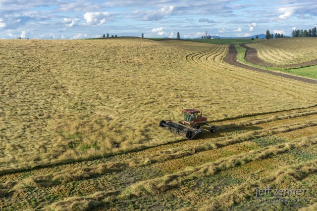Swathing Bluegrass!