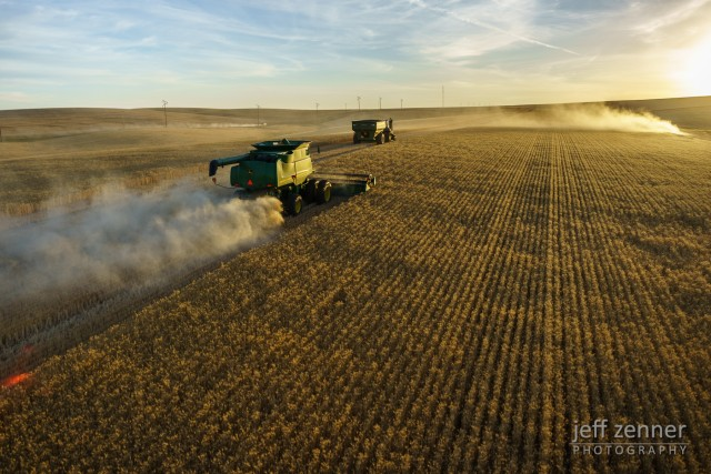 Harvesting a Field of Wheat!