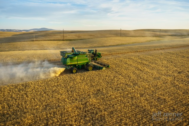 Harvesting Wheat!