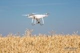 Flying Over the Wheat!