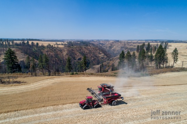 Wheat Harvest on the Camas Prairie in Idaho!