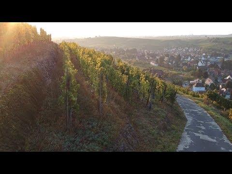 Sunrise in Andlau
