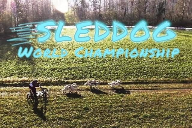 World Dryland Sleddog Championship 2017 | Falzè di Piave