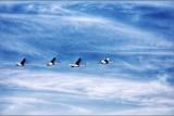 ballade des oiseaux