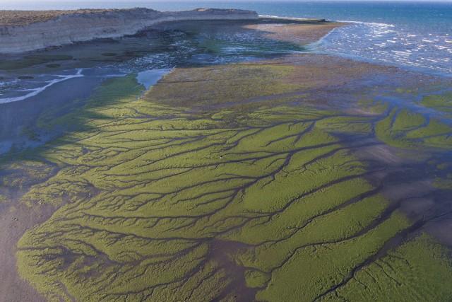 Green algae!