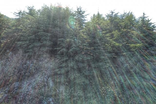 Barouk Cedar Reserve