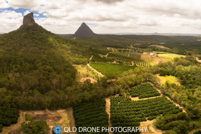 Macadamia plantations in the Glasshouse Mountains