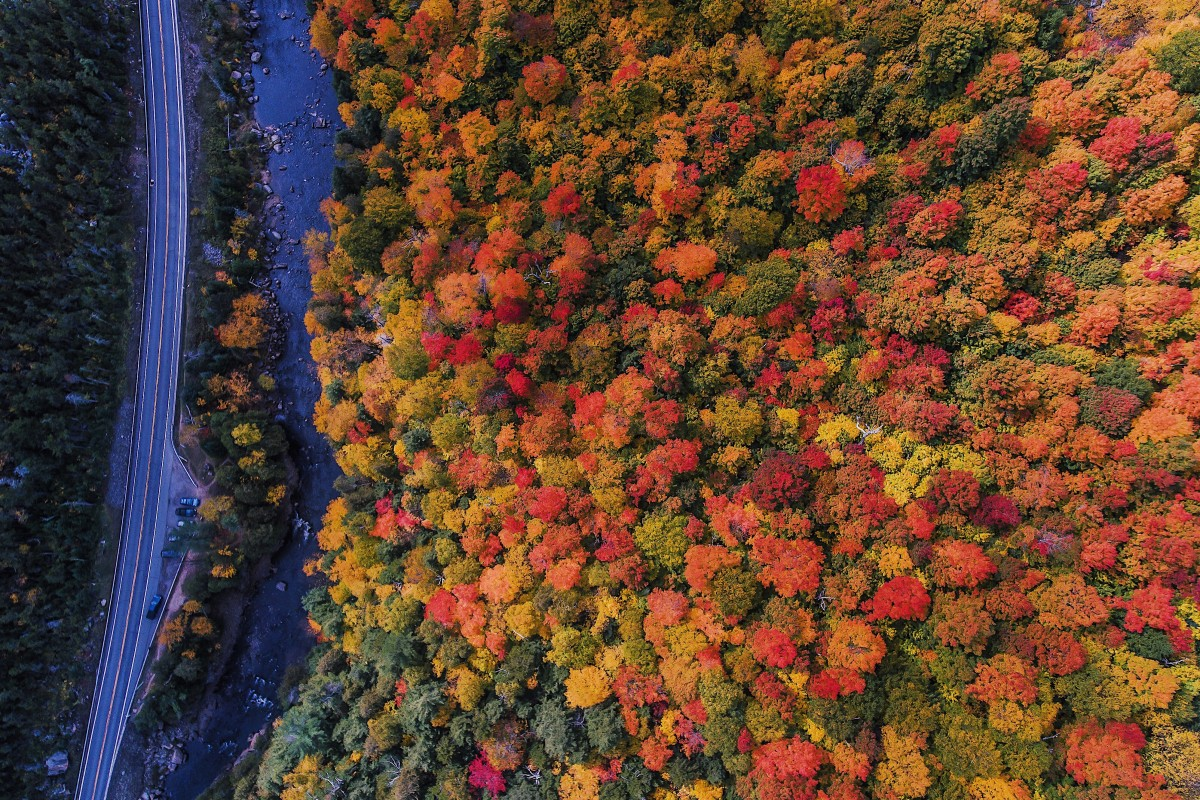 Fall Foliage in Full Effect