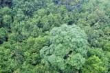 Mayana Rainforest