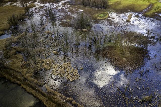 Moor in the winter