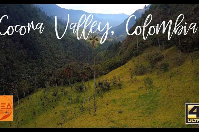 Cocora Valley, Colombia – Home of the Tallest Palms