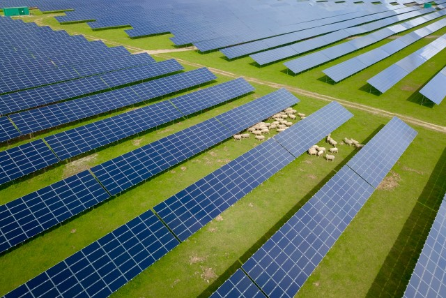 Sheep – Photovoltaic Plant