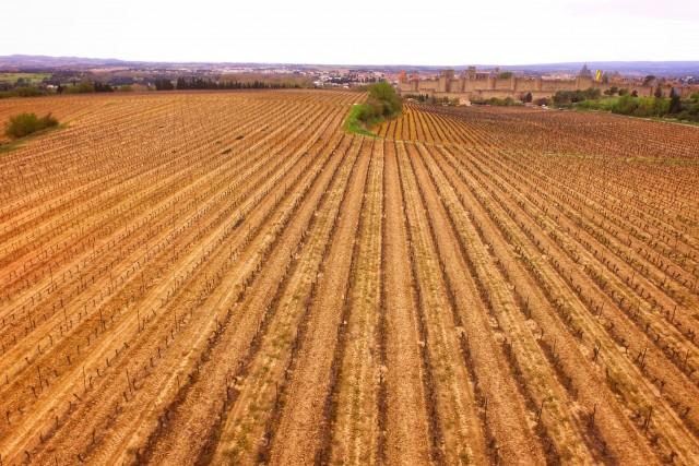 Vineyards near Carcassone