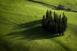 Pine Stand Shadows