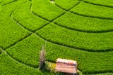 Ricefields in Bali.