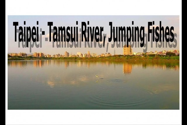 Taipei – Tamsui River, Jumping Fishes