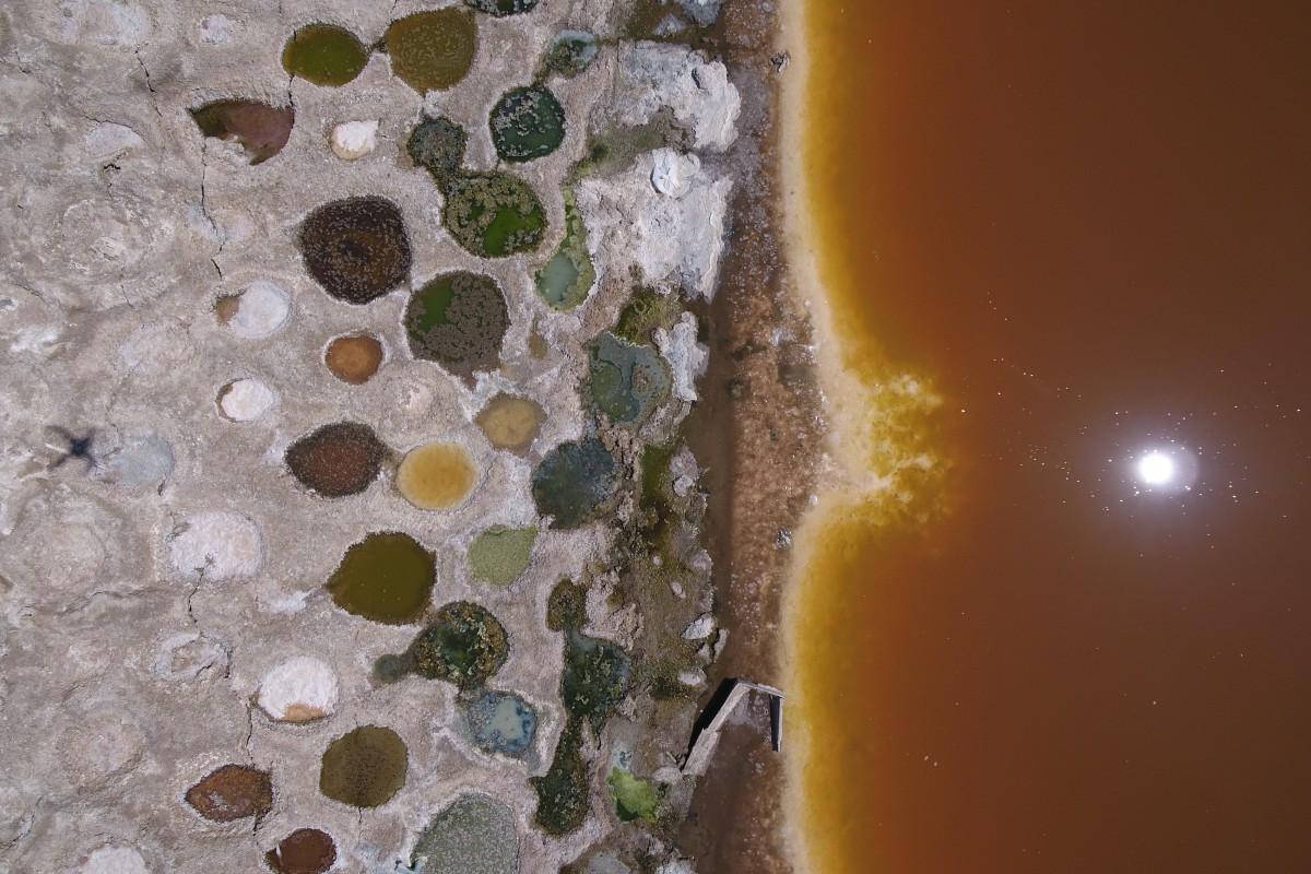 Tilapia beds Salton City, California
