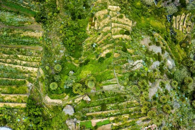 Masca Gardens Tenerife