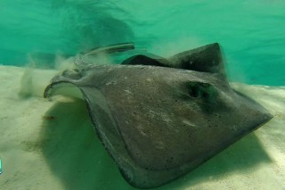Grenadines islands , kitetrip , snorkeling