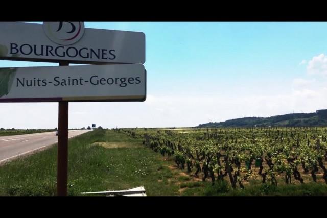 Nuits-Saint-Georges, Bourgogne, France