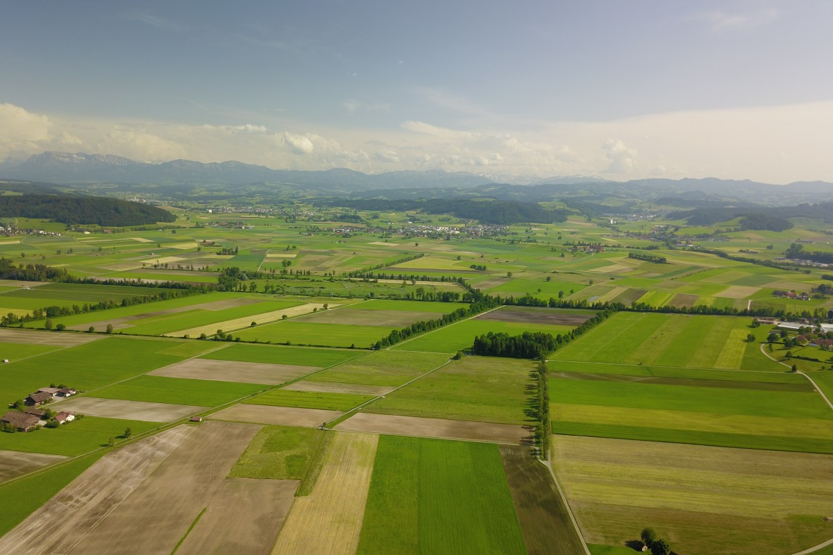 Swiss fields