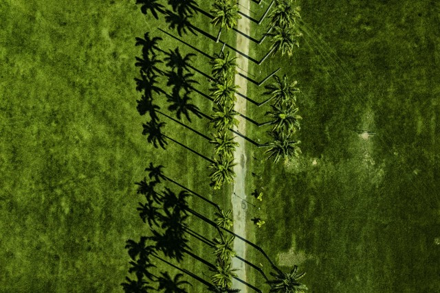 Imperial Palms Shadows @ Sao José dos Campos (SP) – Brazil