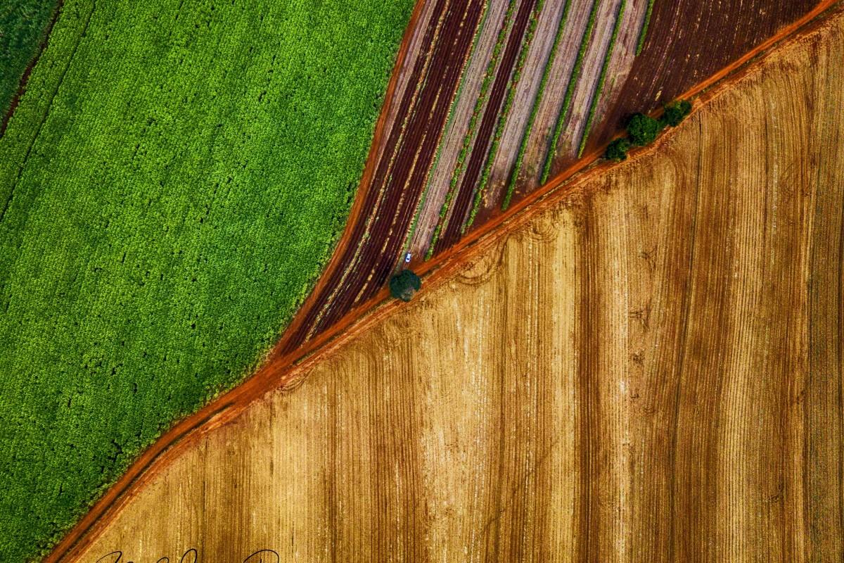 Sugarcane Harvest! Where's Wally? @ Cravinhos(SP), Brazil