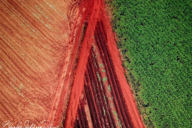 Reeds Colour Contrasts @ Cravinhos (SP) Brazil
