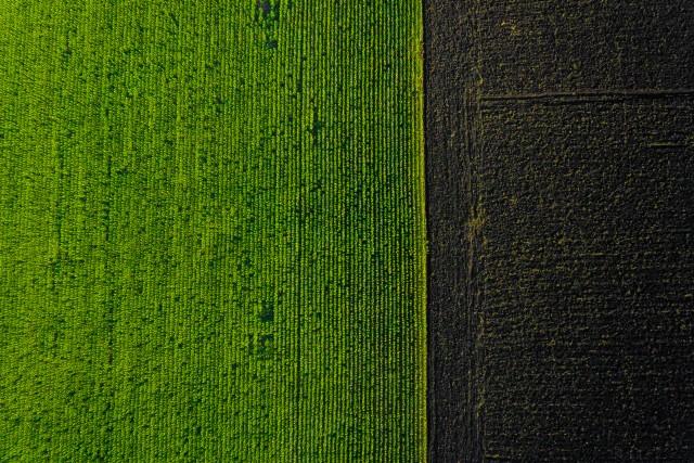Two field