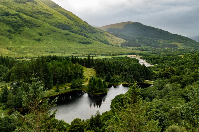 Forested Glen @ Glen Coe