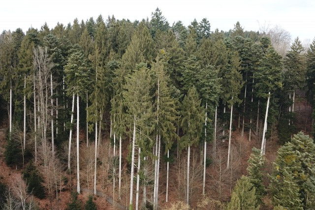 Swiss trees