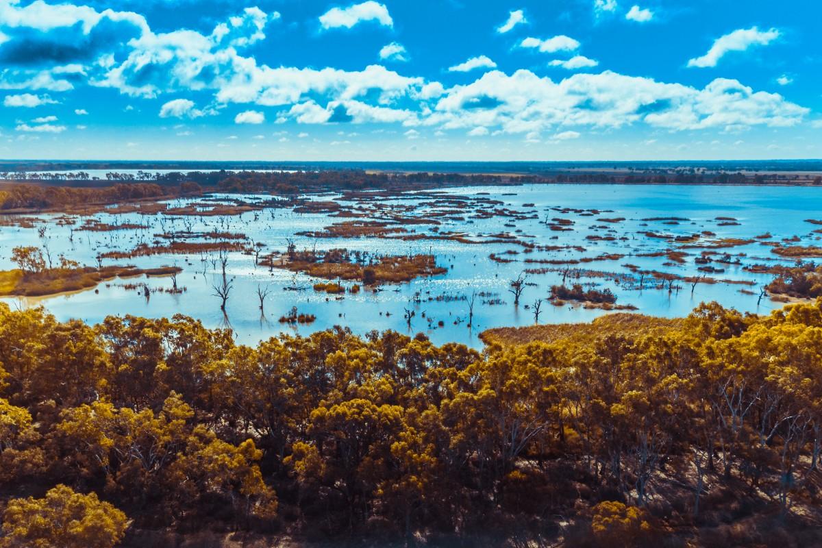 Ibis Rookery Middle Reedy Lake