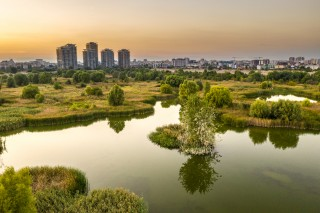 Vacaresti Delta, Bucharest