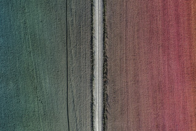 Colorfull field
