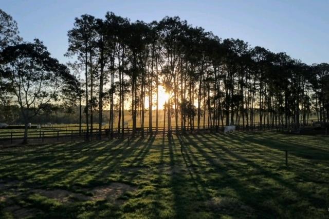 Farm Tapijara