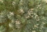 Plantas cenital