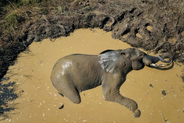 Elephant sleeping in a pool of mud, Nyonié Gabon.