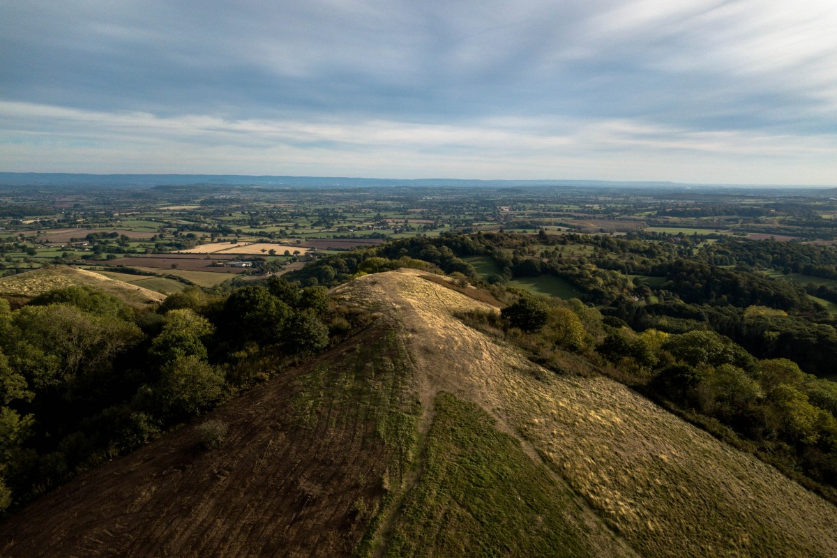 Holly bush hill